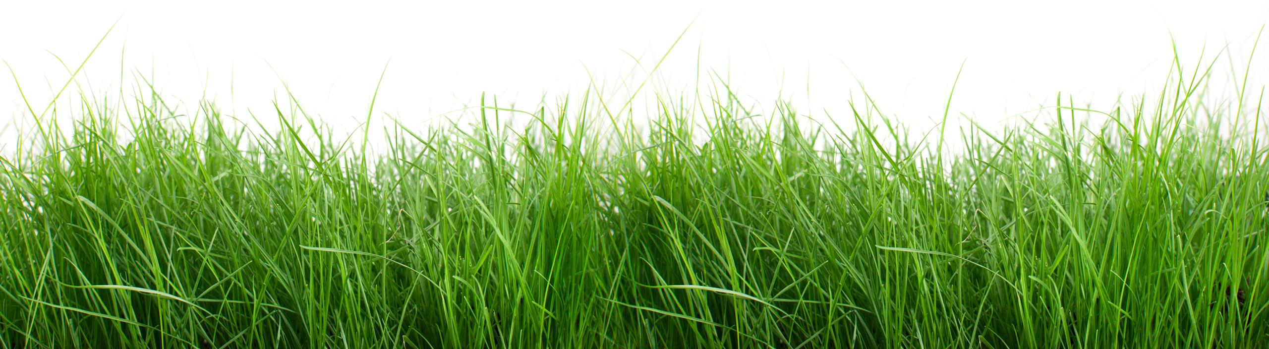 grass-bg